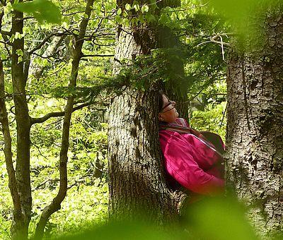 Waldbaden im Osnabrücker Land ist ein Stresskiller! Mit nur wenig Anleitung kann Waldbaden auch ganz leicht in den Alltag integriert werden.