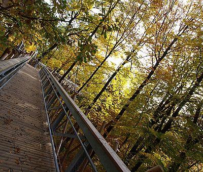 Im Waldkurpark in Bad Iburg mit seinem herrlichen alten Baumbestand entdecken Sie auf dem Baumwipfelpfad die Urkraft des Waldes.