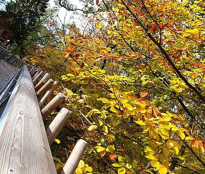 Im Waldkurpark Bad Iburg mit seinem herrlichen alten Baumbestand entdecken Sie bei einem Waldbad die Urkraft des Waldes und fördern so auf ganz natürliche Weise Ihre Gesundheit. Ein Gang über den Baumwipfelpfad macht das Ganze zum besonderen Erlebnis.