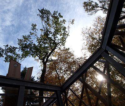 158 Stufen hinauf ins Sonnenlicht: Wer aus dem Schatten des Bad Iburger Waldkurparks in die Wipfel der alten Baumriesen hinaufsteigt, muss zunächst immer ein bisschen blinzeln, muss sich erstmal an die Helligkeit in rund 30 Metern Höhe gewöhnen. Hier oben auf dem Baumwipfelpfad ist alles anders als unten im Wald: die Blätter zarter, die Vogelstimmen lauter und klarer, das Licht und die Luft reiner, der Himmel ein Stück näher.
